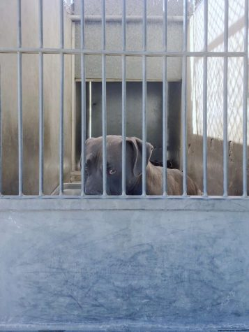 A shy dog in his cage at the OC Animal Care Shelter.