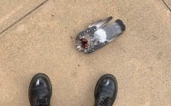 Cults or coincidence; Mutilation of animals in local suburbs sparks local fear