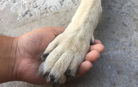 A bond of happiness; The bond between pets and people