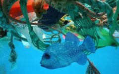 A beautiful fish's ecosystem is damaged by waste from land.